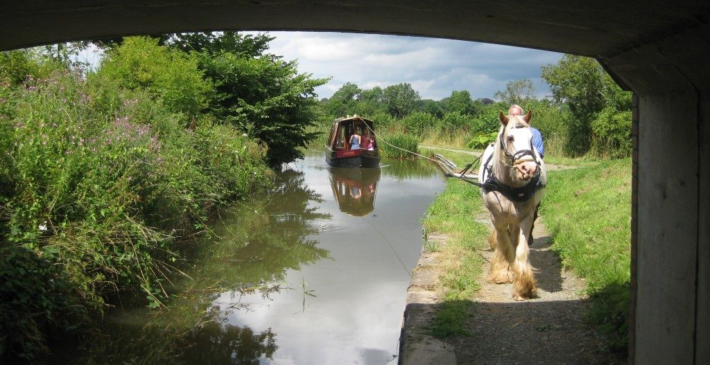 horse pulling a boat under a bridge on the montgomery canal